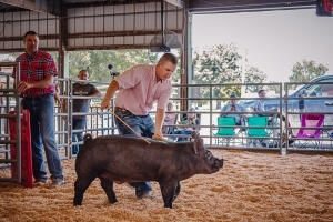 Timber Neal,Breed Reserve Champion Swine Dexter/Otto 4-H, Dexter