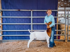 Kennedy Holcomb,3rd Blue Meat Goat Floral 4-H, Winfield